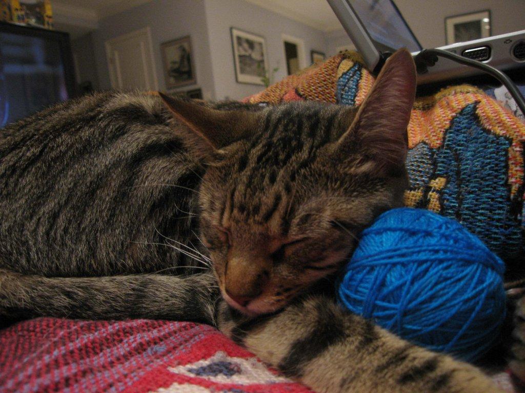 ip yumağına yaslanmış uyuyan kedi