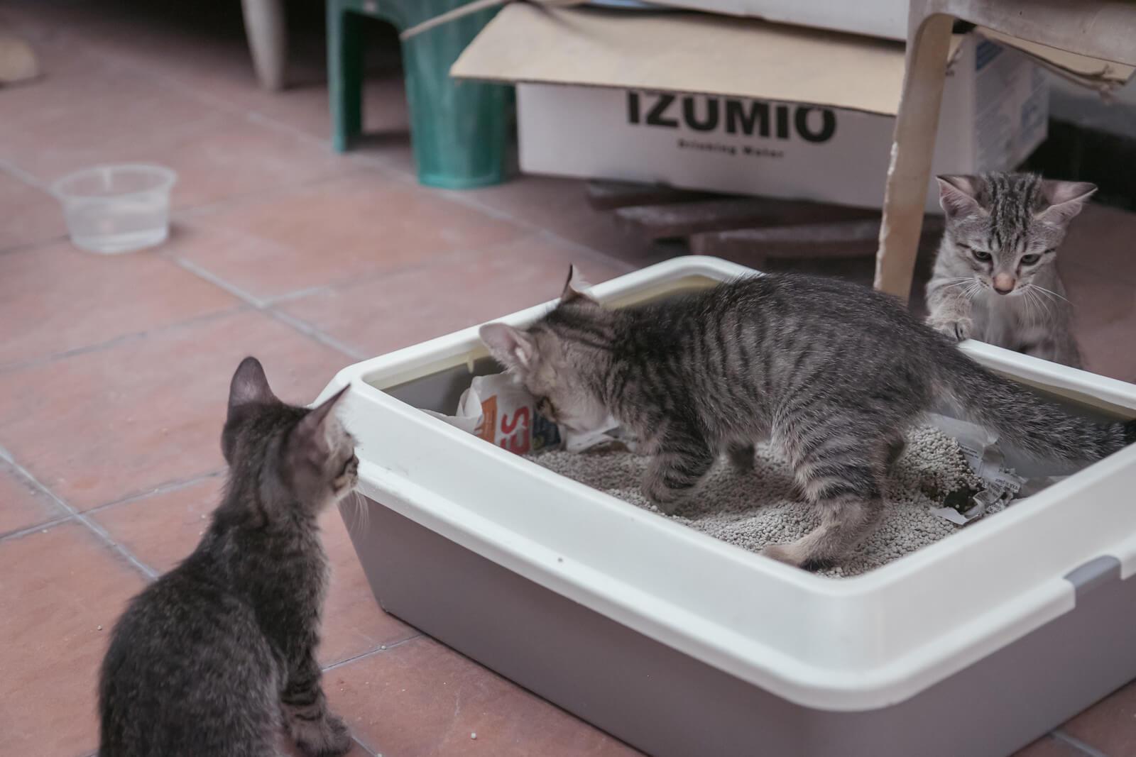 kedi tuvaleti