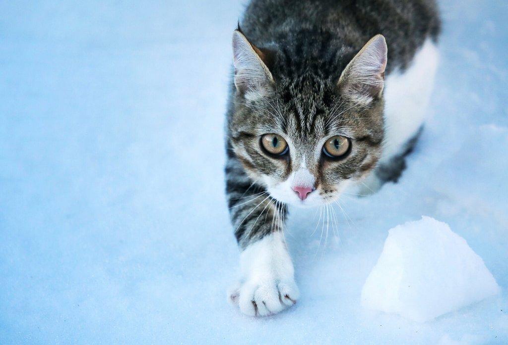 dik dik bakan sinirli kedi