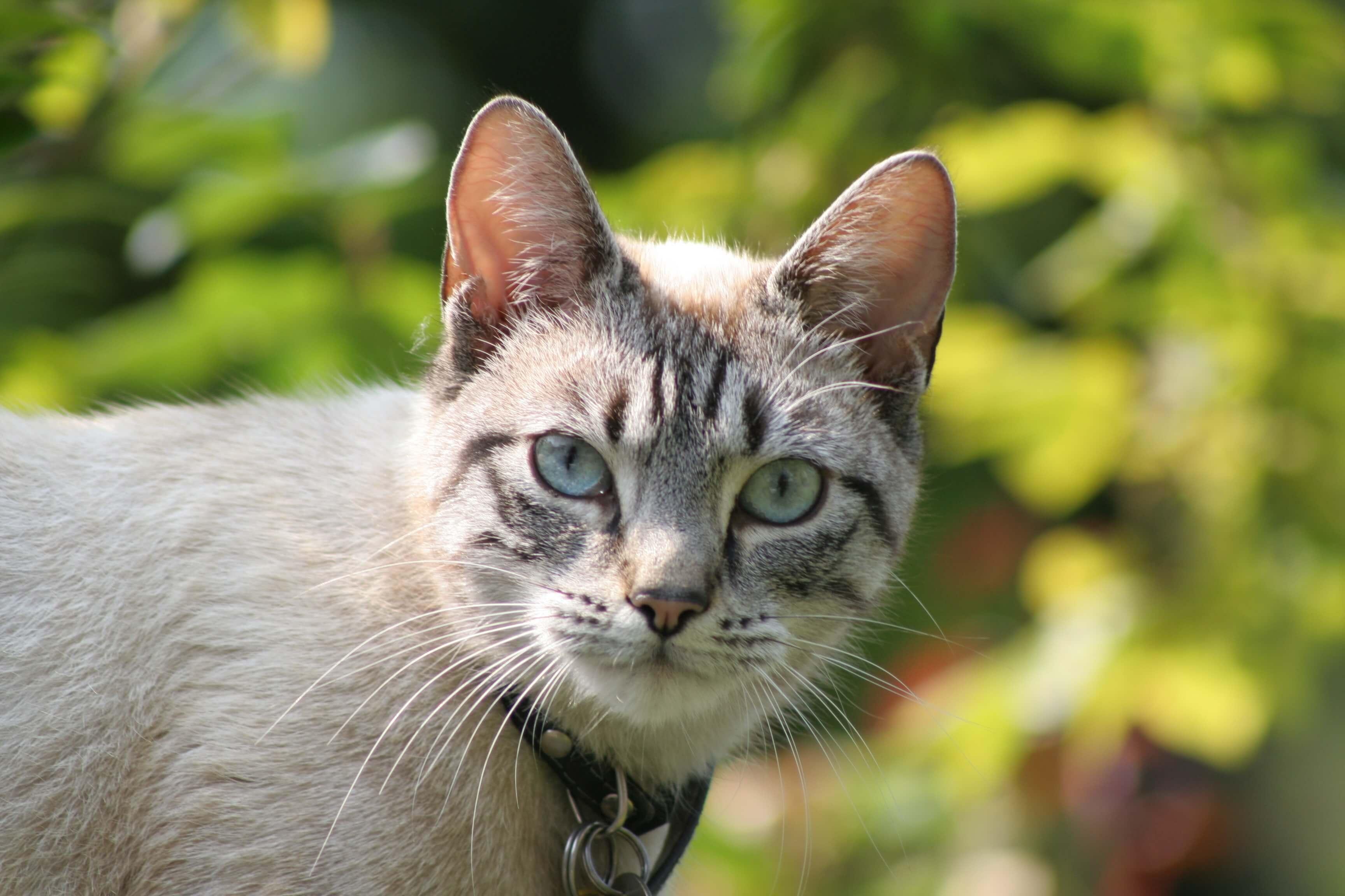 dik dik bakan kedi