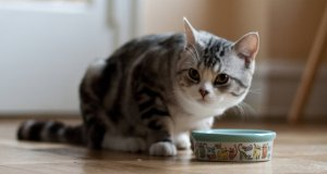 mama yiyen kedi