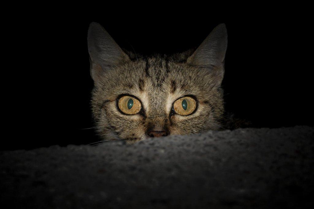 Dik dik bakan korkmuş kedi