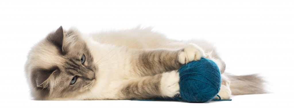 ip yumağıyla oynayan kedi