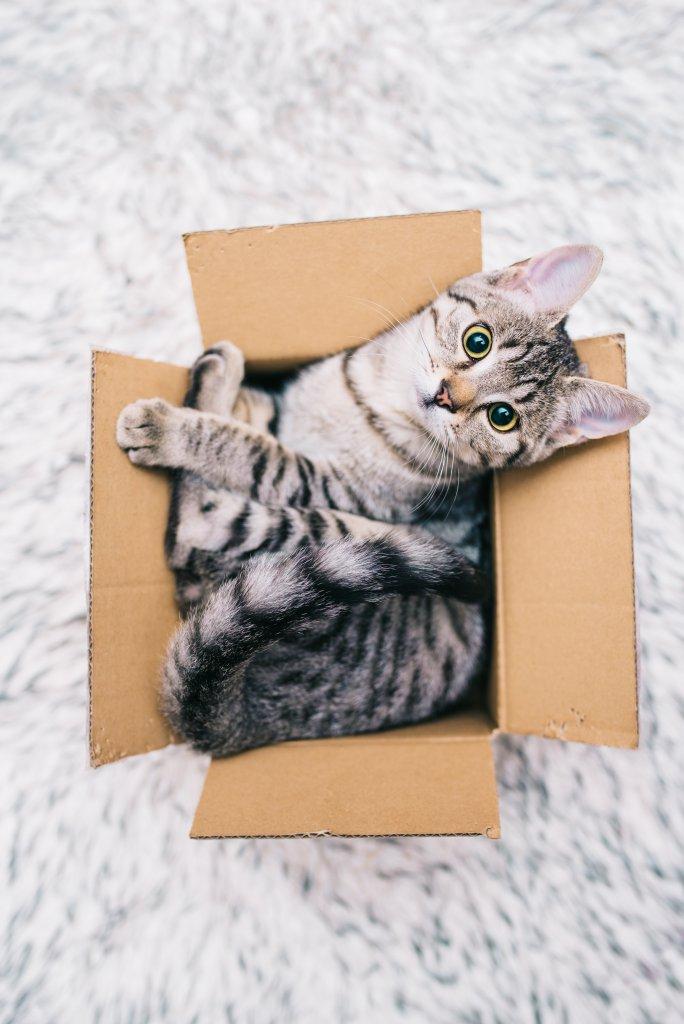 karton kutuya girmiş kedi