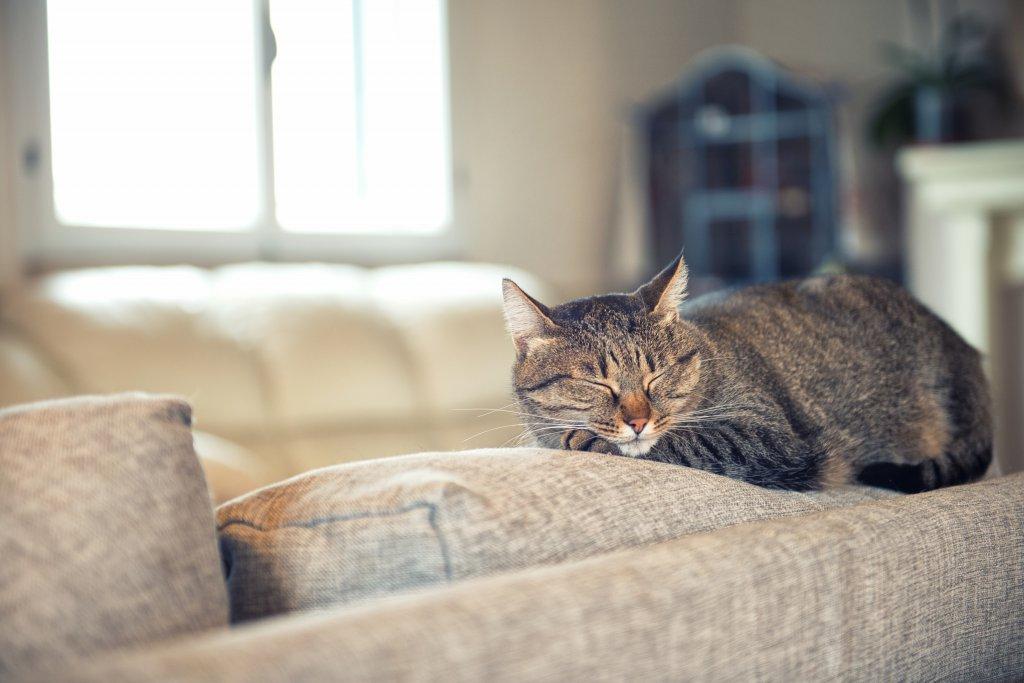 koltukta dinlenen tekir kedi