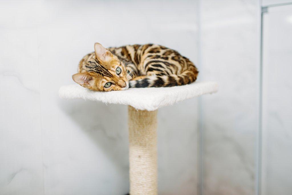 kedi tırmanma standı