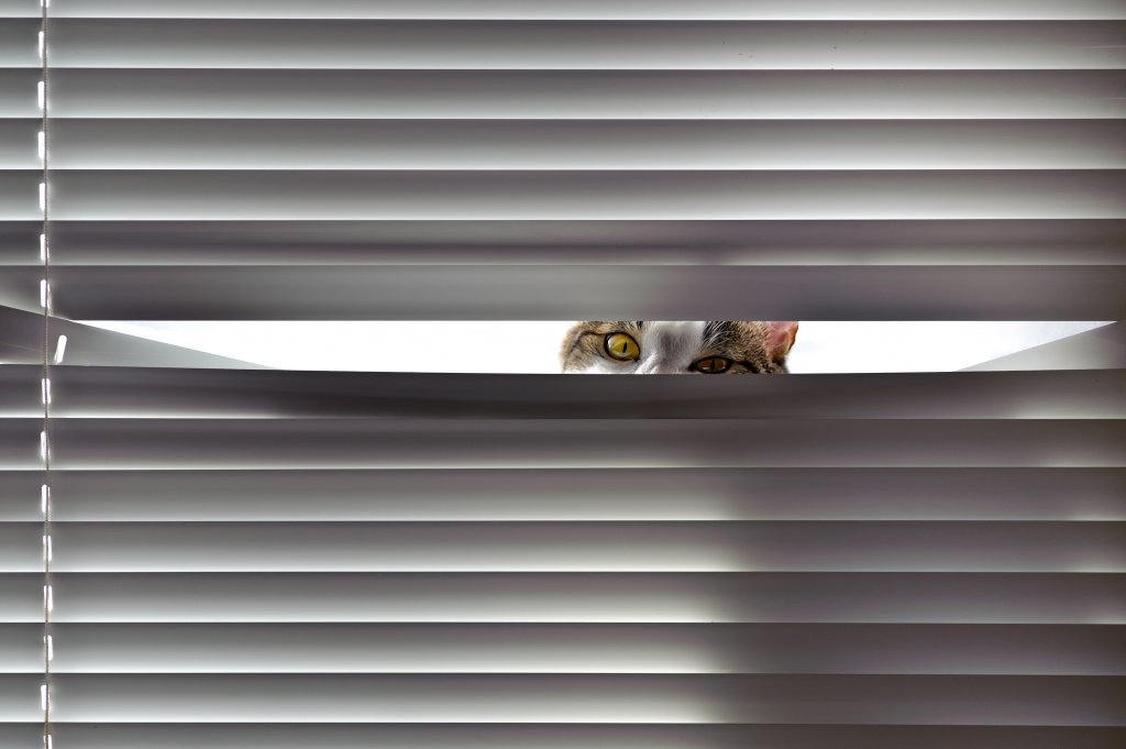meraklı kedi