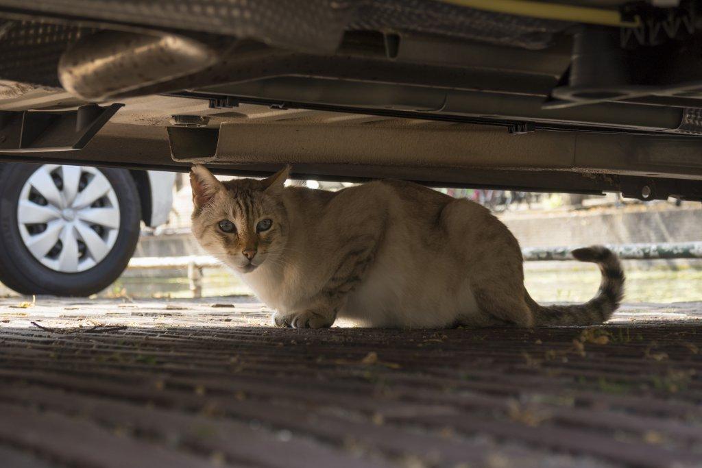 araba altına saklanmış korkmuş kedi