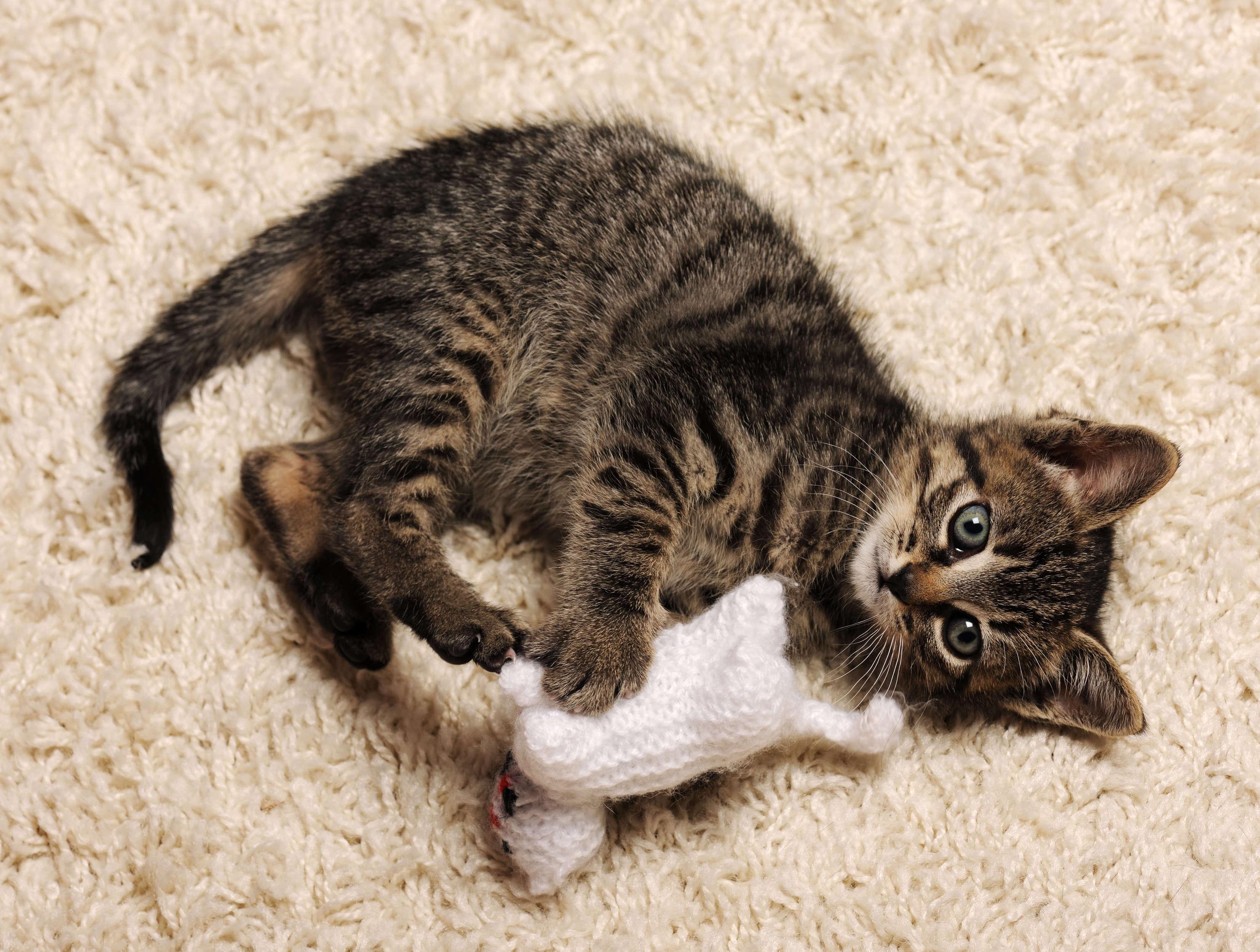 örgü oyuncakla oynayan yavru kedi