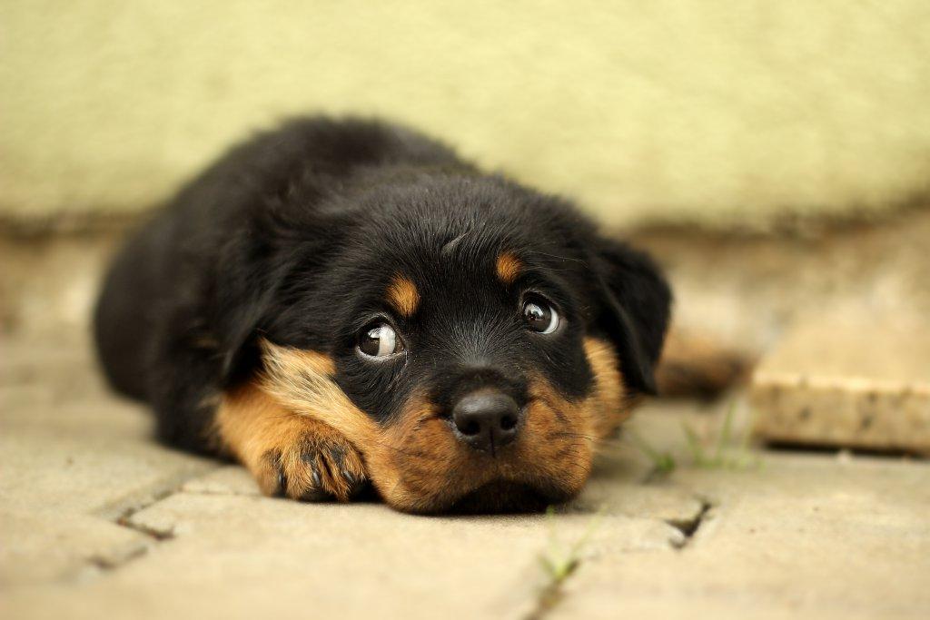 yavru şirin köpek