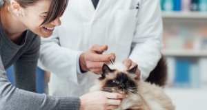 aşı olan kedi