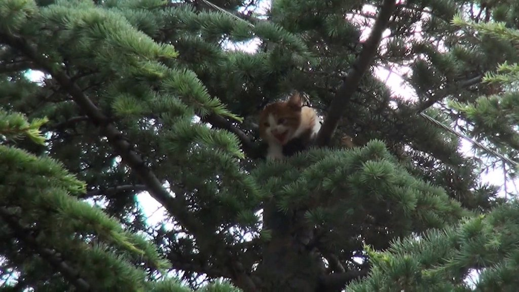 Karaman'da yavru kedi ağaçta mahsur kaldı
