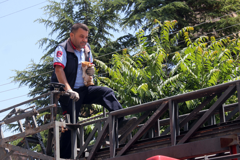 Karaman'da ağaçta mahsur kalan kediyi itfaiye ekipleri kurtardı