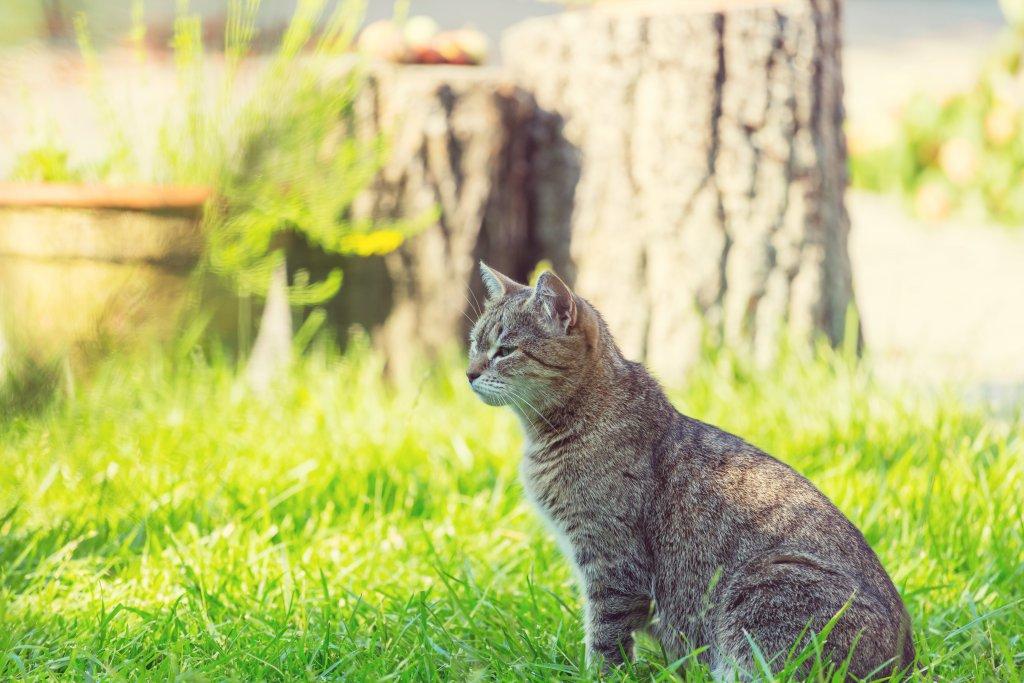 yazın çimlerde keyif çatan kedi
