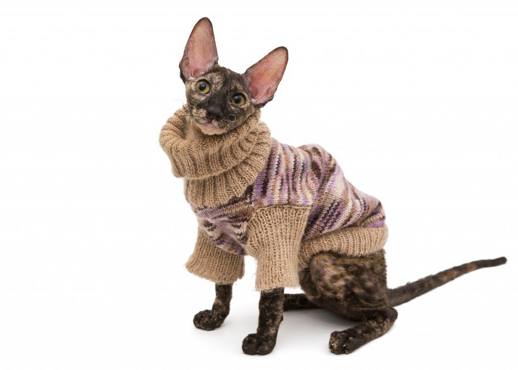 süveter giydirilmiş kedi