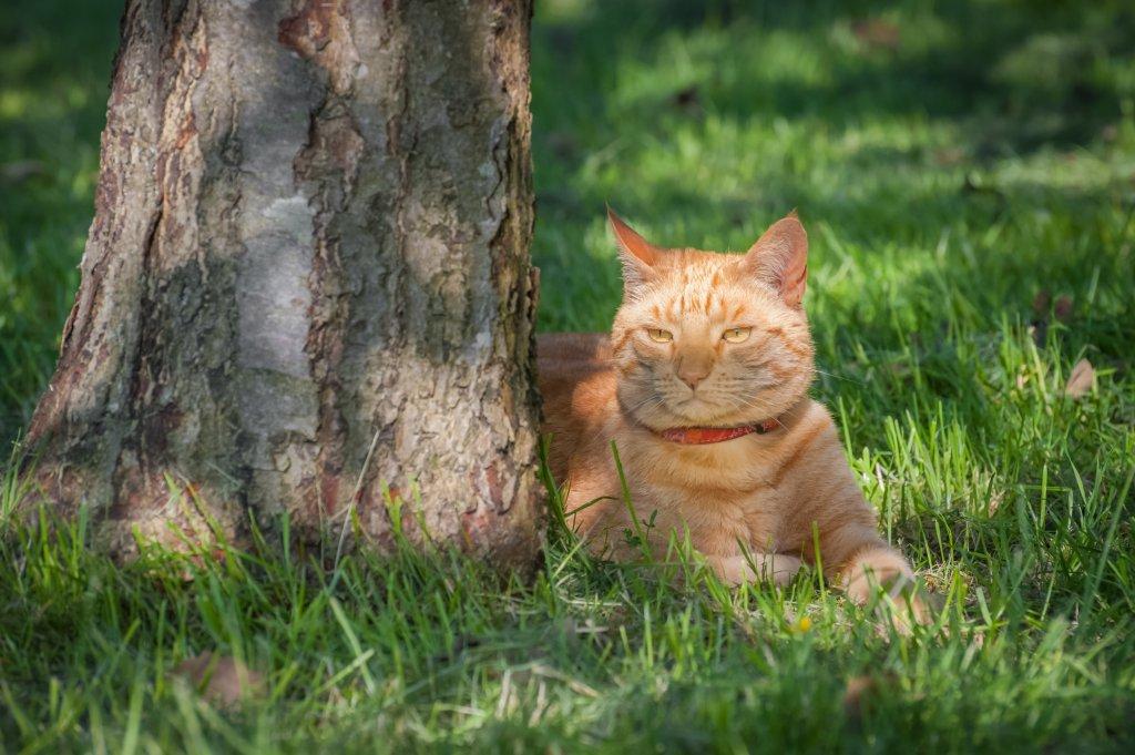 ağaç yanında uzanan kedi