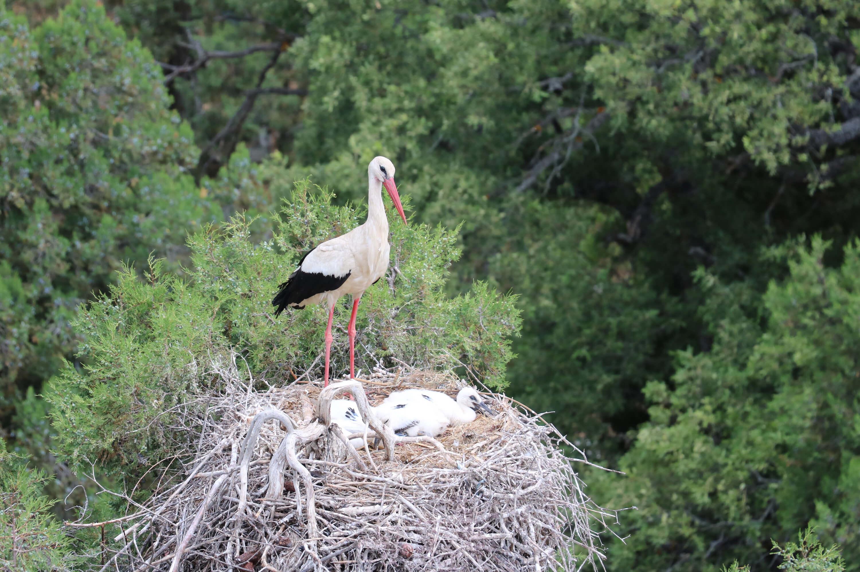 Konya Beyşehir Leylekler Vadisinde yavrular uçmaya hazırlanıyor