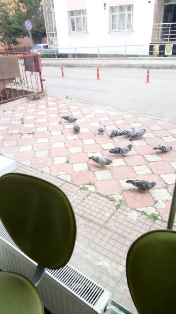 Yemlenen kuşlar