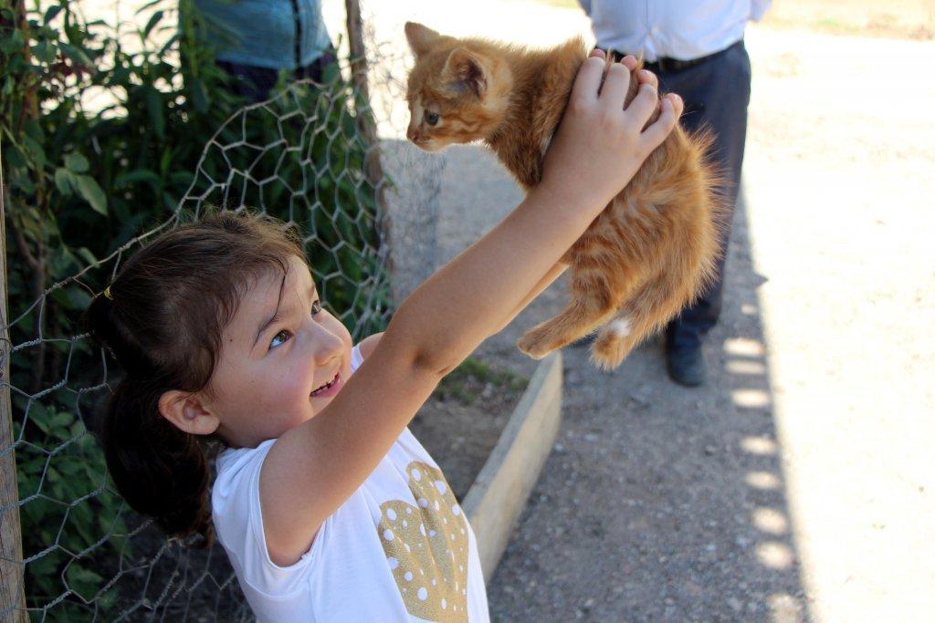 Selden kurtulan kedi pamuk