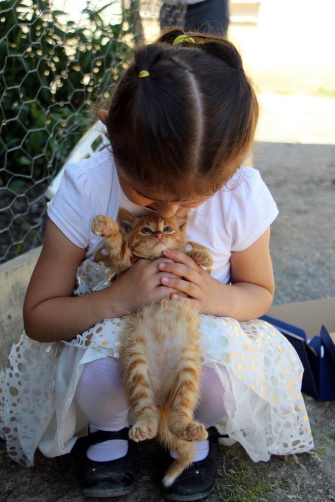 Minik Azra selden kurtardığı kediye pamuk adını verdi
