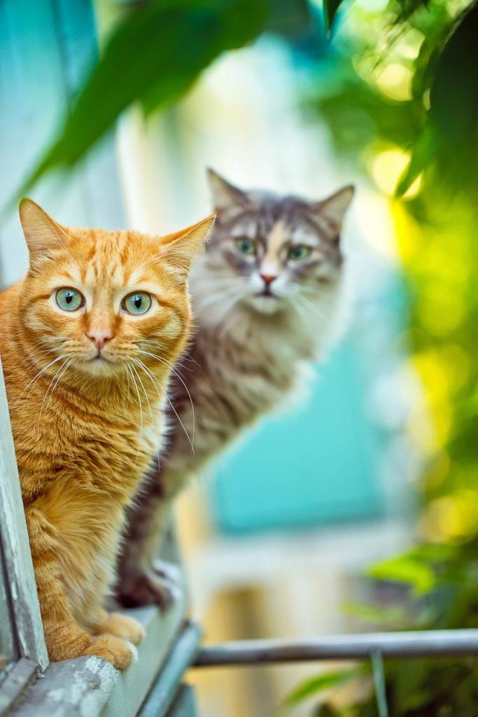 balkondan dışarı bakan kediler