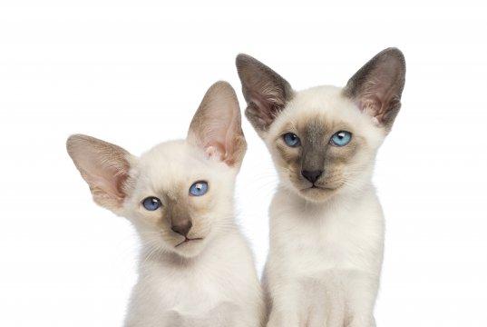 2 yavru kedi poz veriyor