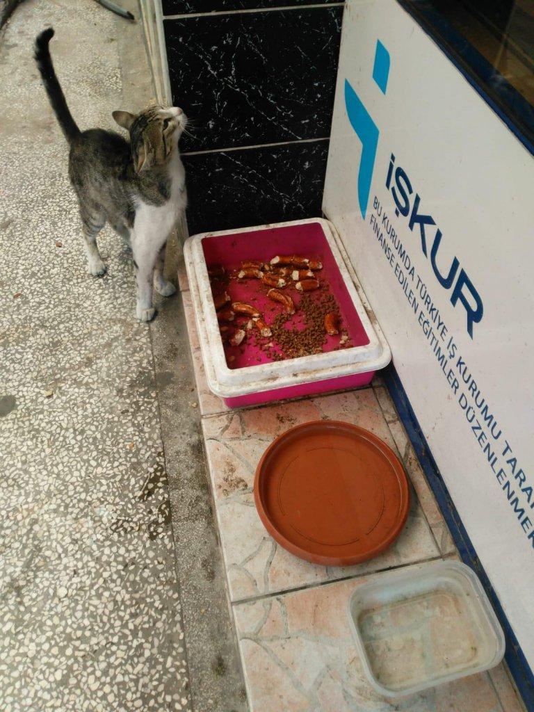 sokak hayvanları için bırakılan mamalardan yiyen bir sokak kedisi