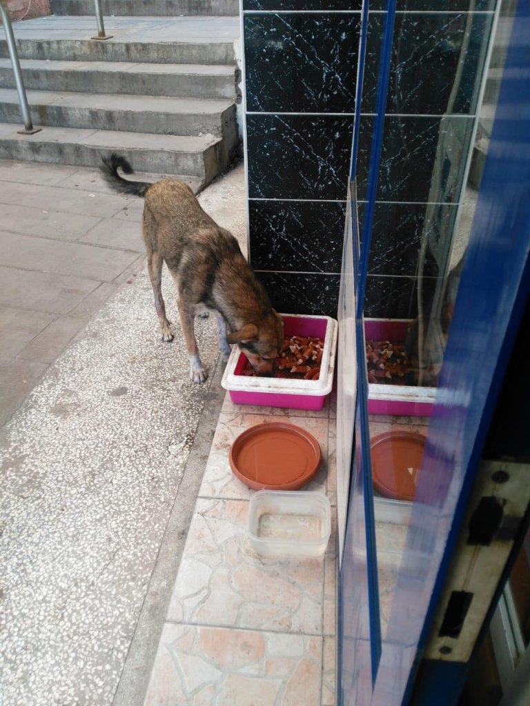 sokak köpeği yerel gazete önüne bırakılan mamalar ile karnını doyuruyor.