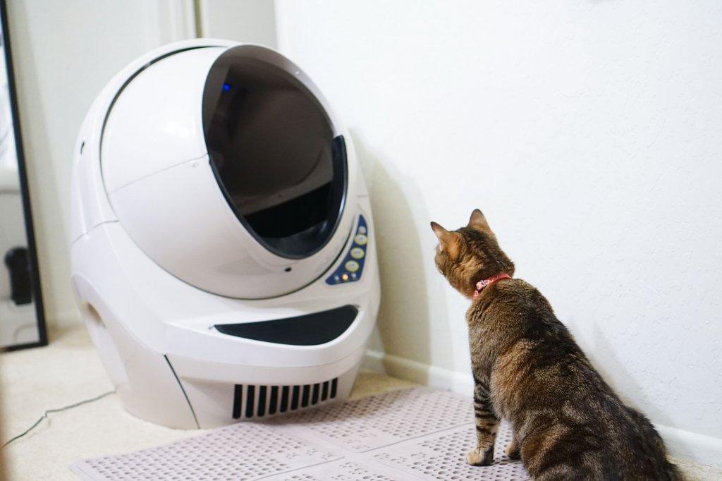 kedi meraklı bir şekilde otomatik kedi tuvaletinin çalışmasını izliyor.