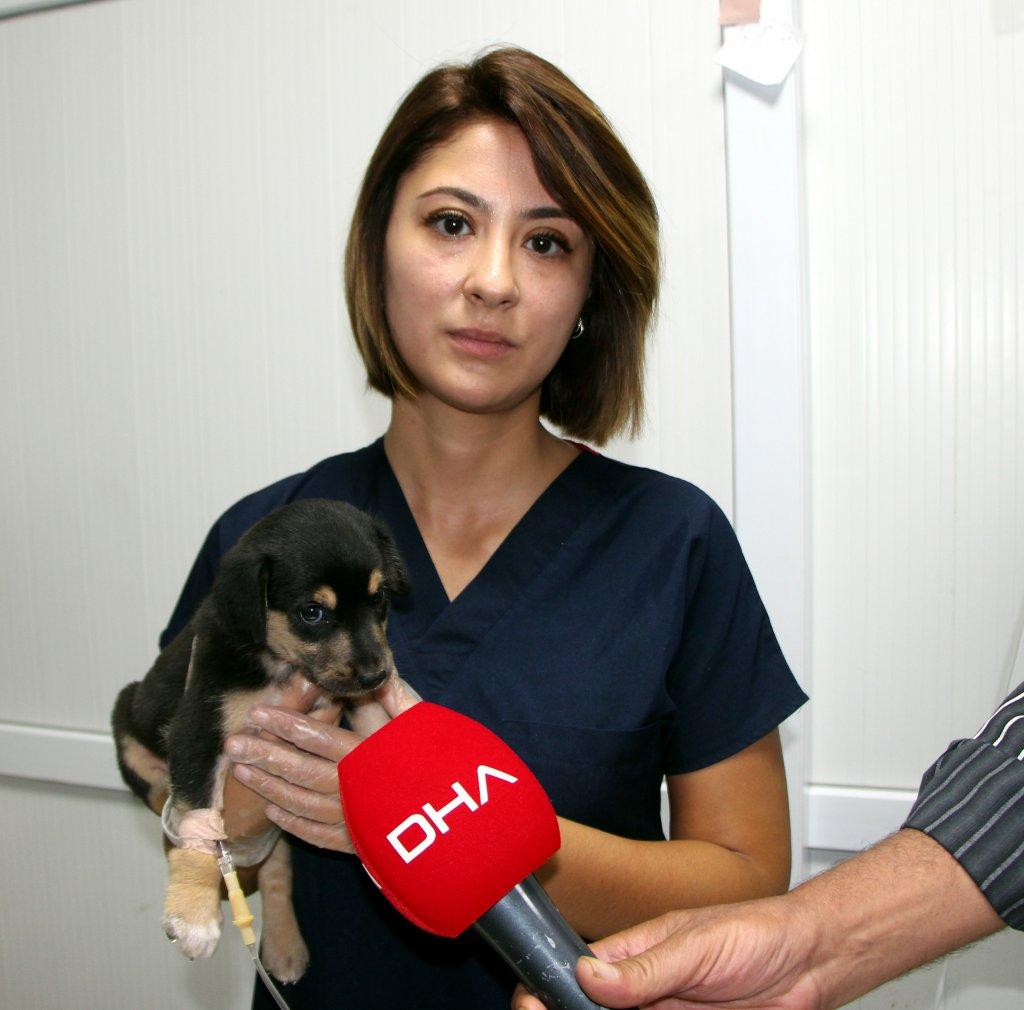 yaralı yavru köpeğin ilk müdahelesi yapıldı, hala tedavi altında