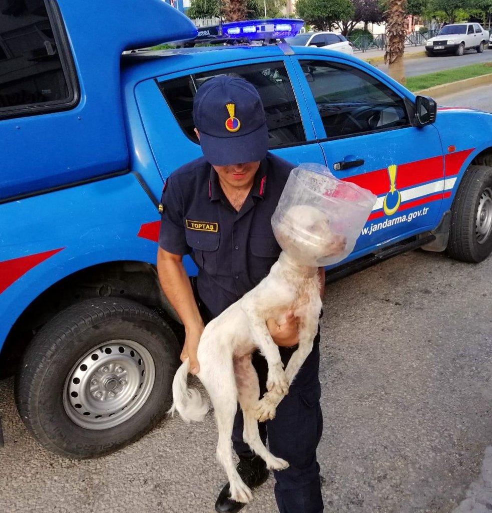 jandarma tarafından bulunan zavallı köpek veterinere götürüldü