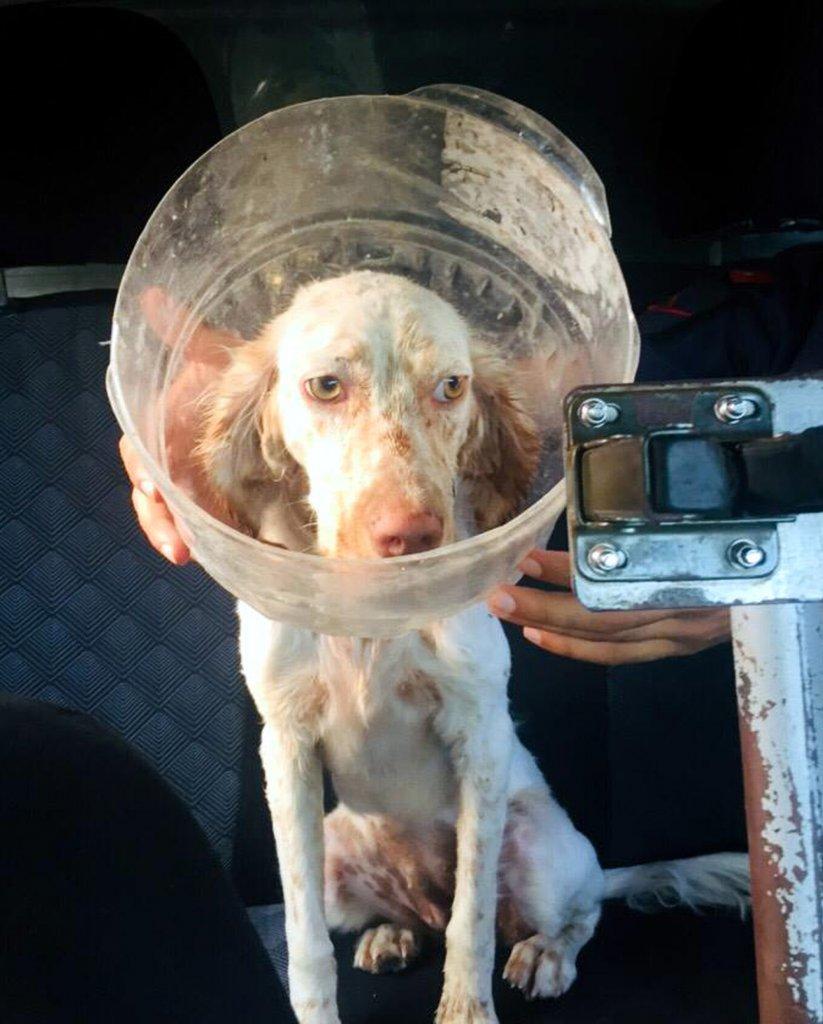 kafası plastik bidona sıkışan köpeğin yakından çekimi