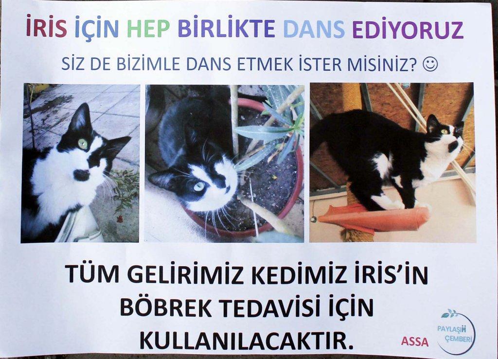 böbrek hastası kedi iris'in tedavisi için hazırlanan ilan