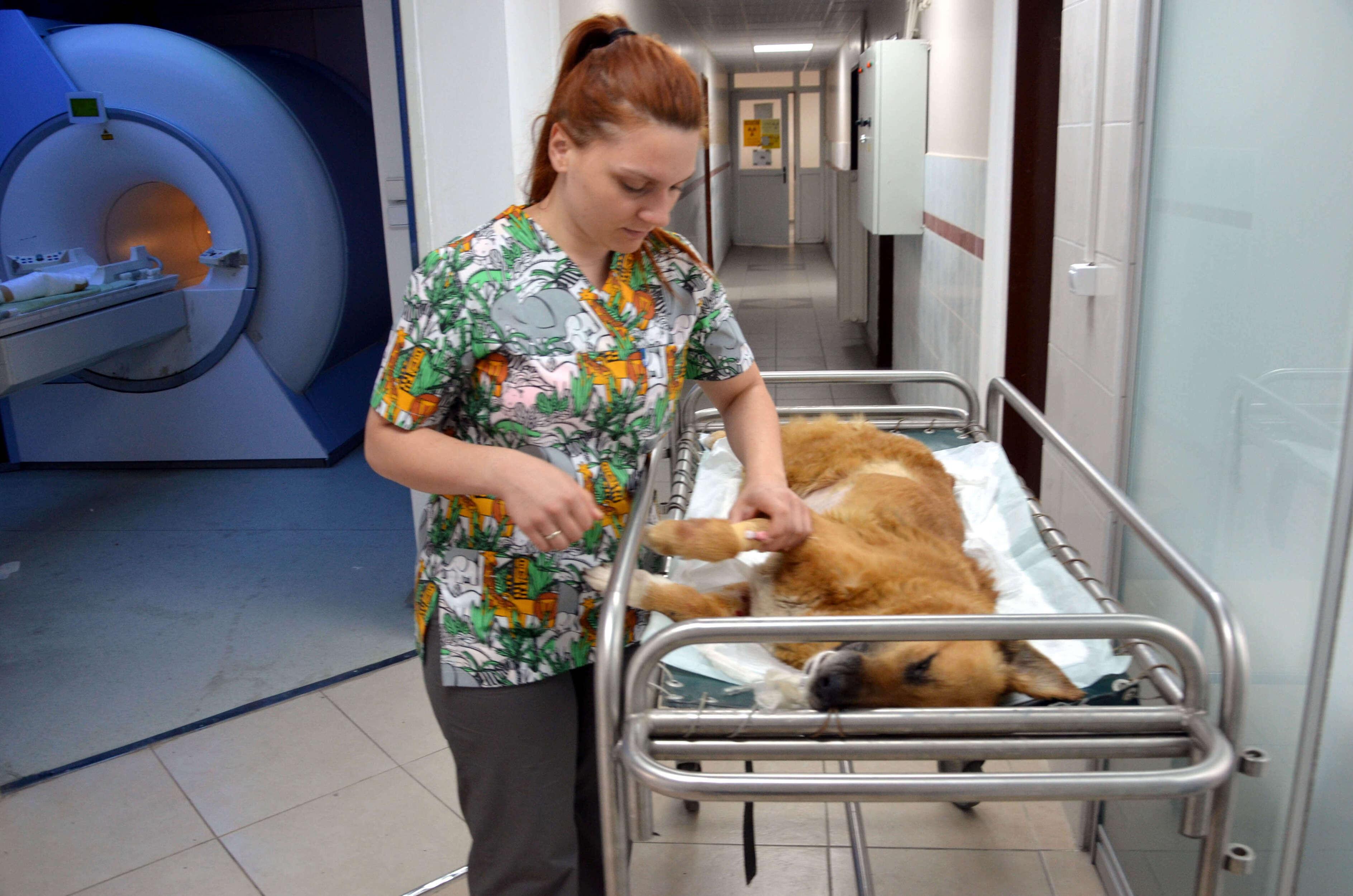 İstanbul Üniversitesi Cerrahpaşa Veteriner Fakültesi Araştırma ve Uygulama Hastanesi'nde yılda yaklaşık 50 bin hayvanın tedavi ediliyor.