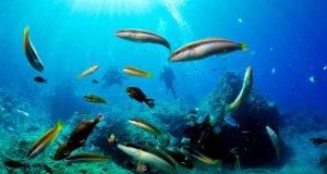 Küresel iklim değişiklikleri denizlerimizi kötü etkiliyor