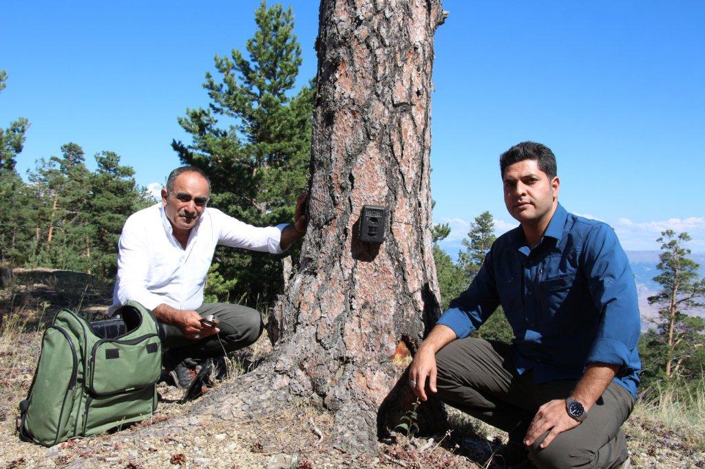 Fotokapanın kurulu olduğu ağacın resmi