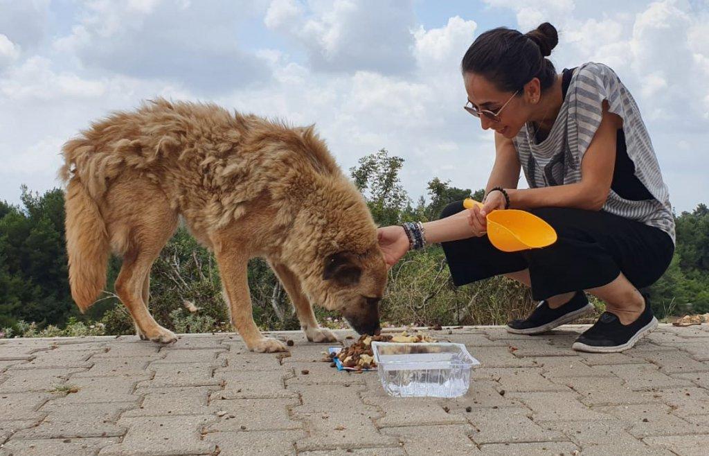 mama ve su verilen sokak köpeği