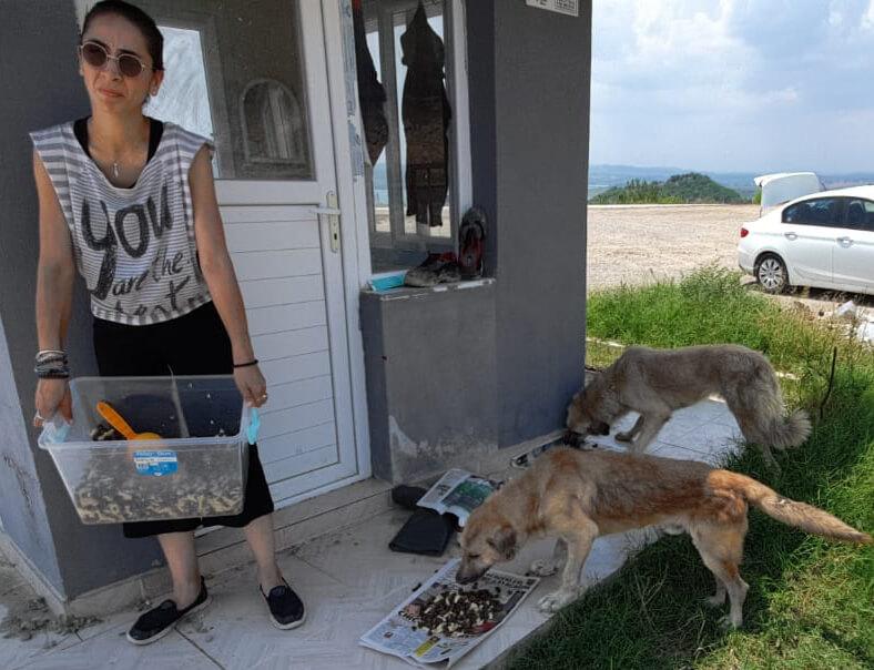sokak köpekleri onlara verilen mamaları yiyor