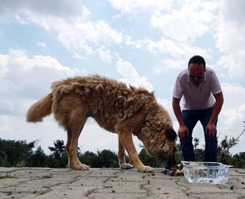 sokak köpeği ona verilen mamadan yiyor.