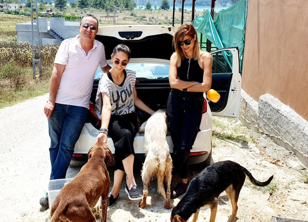 Gönüllü pati dostları besleme yaparken sokak köpekleri onları heyecanla bekliyor.