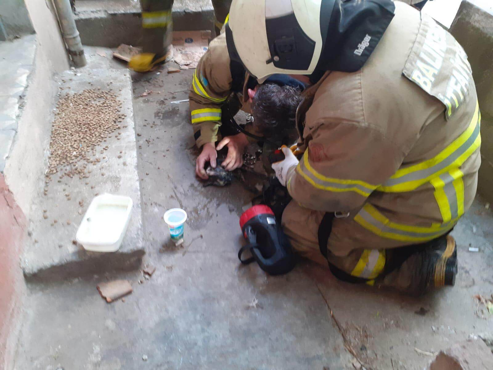 Balıkesir Bandırma'da bir evde çıkan yangında anne kedi zehirlendi yavruları öldü