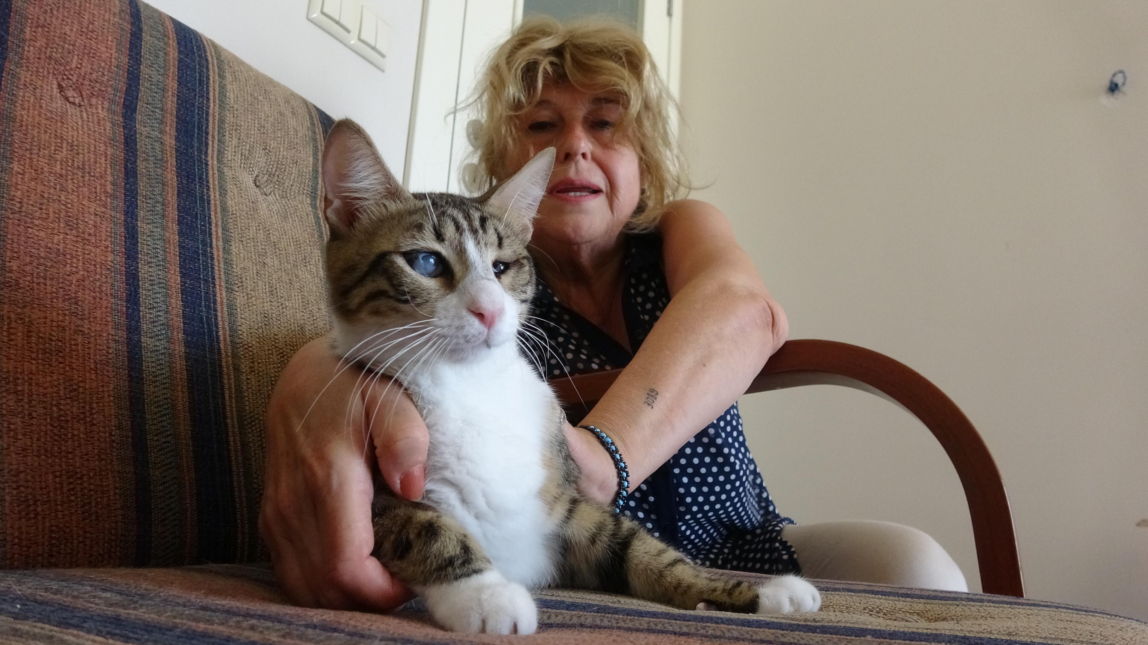 Engelli 3 kediye evden tahliye kararı