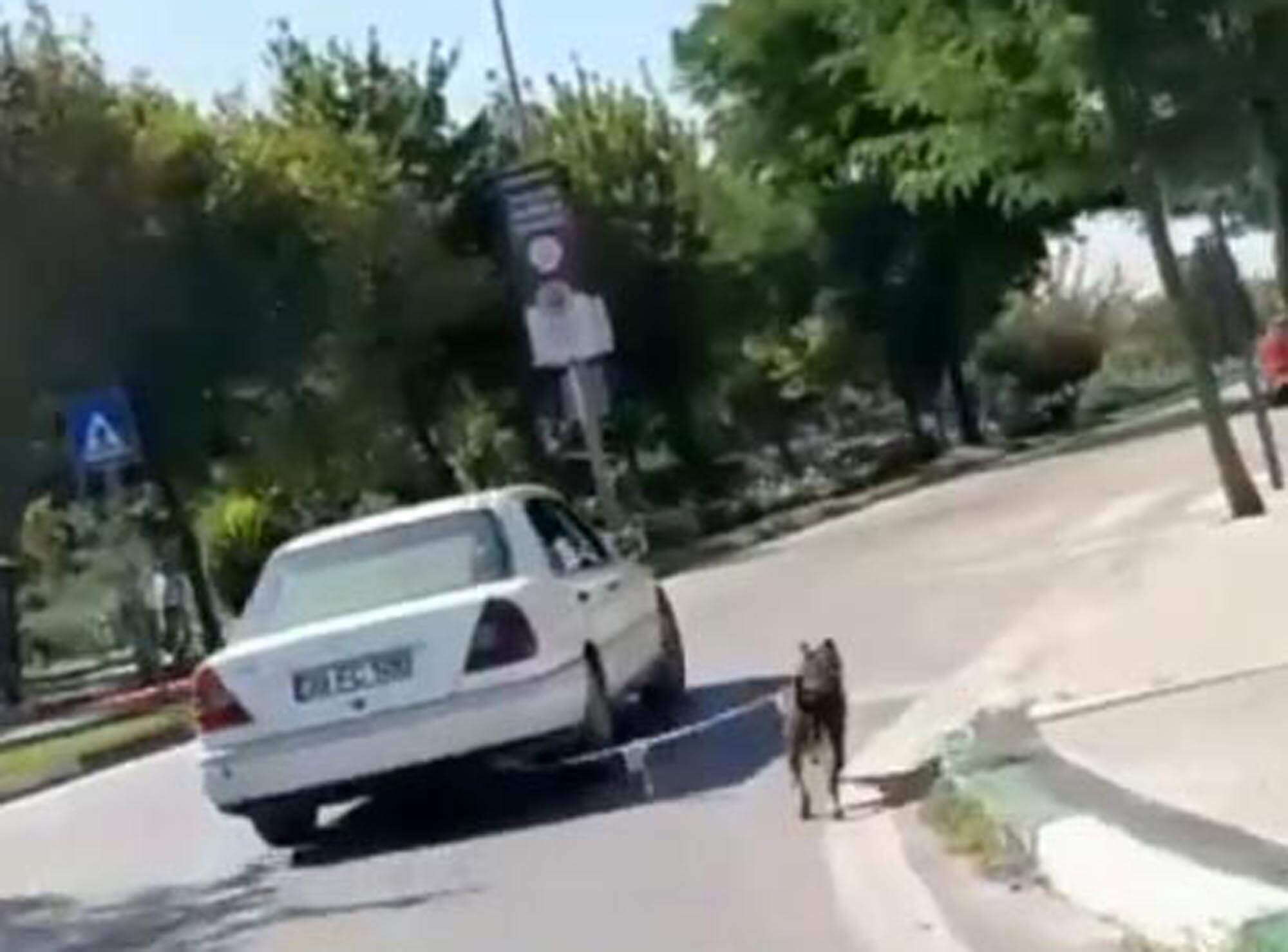 Aracının ardına bağladığı köpeğin görüntülerinin yayılmasının ardından yasal işlem başlatıldı