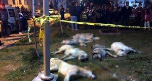 Köpekleri zehirleyen sanıklar, ağır cezada yargılanacak