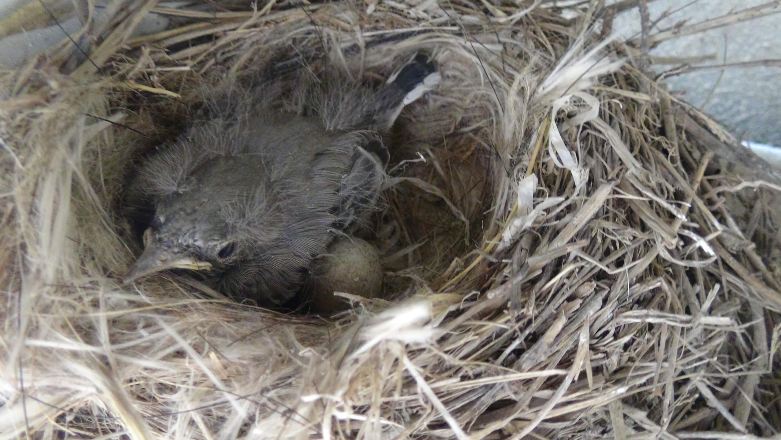 çalıştırılmayan mikserin içerisindeki kuş yuvasının resmi