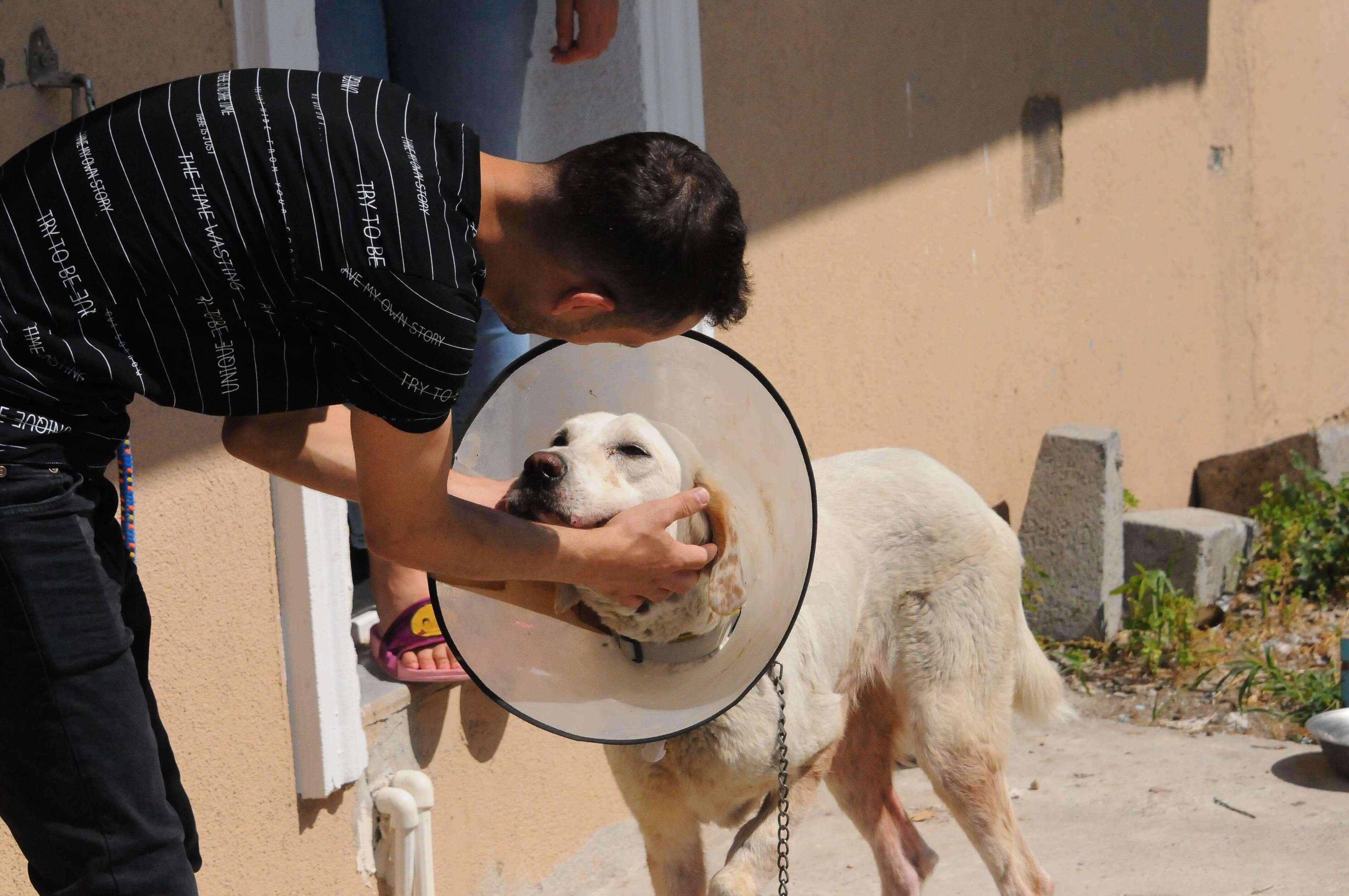 mahallelinin uğruna birlik olduğu köpek limon
