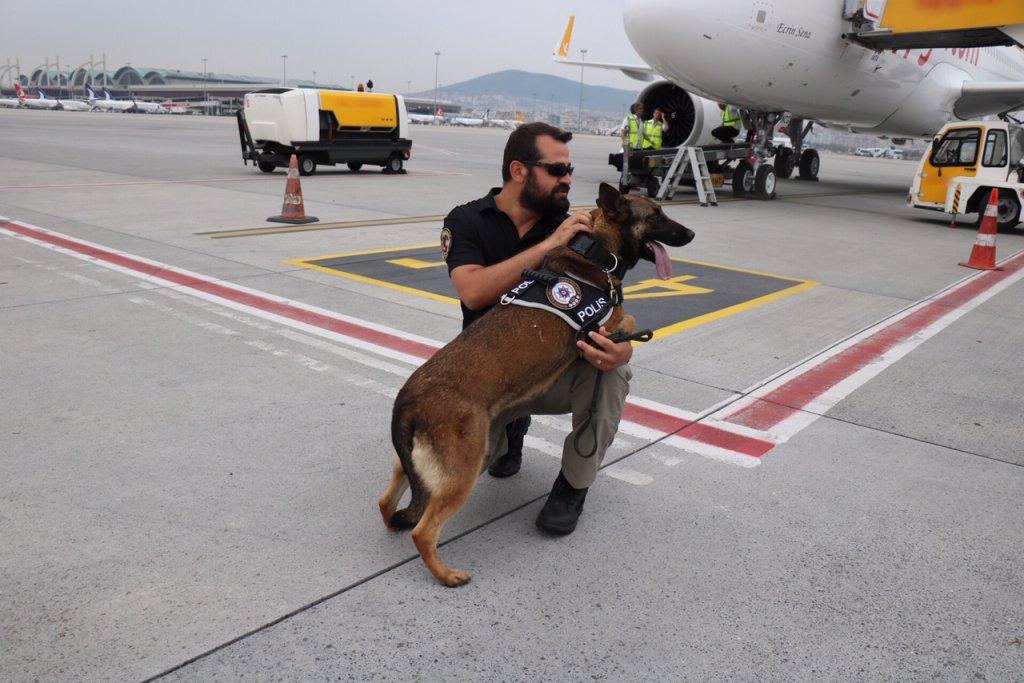 Narkotik köpekleri hava alanında