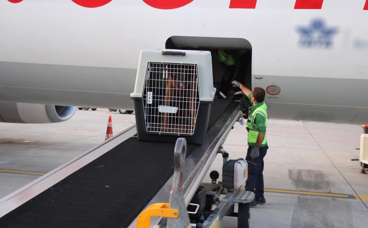 narkotik köpekleri şark görevlerine gitmek için uçağa bindirilirken resmedildi