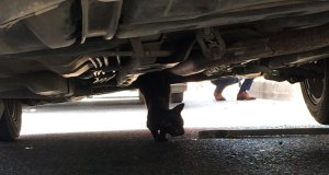 Şişli'de aracın altına sıkışmış halde bulunan kedi