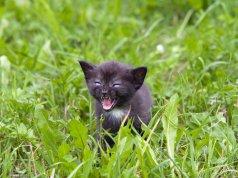 çimlerin üstünde yalnız kalmış siyah kedi miyavlıyor
